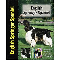 English Springer Spaniel - Pet Love