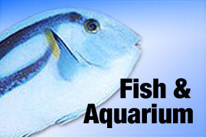 Fish and aquarium accessories